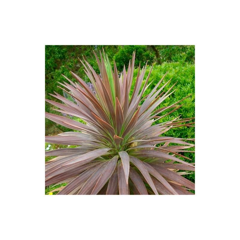 Vente en ligne de plantes exotiques et tropicales d for Plante exotique exterieur