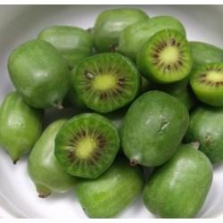 Actinidia arguta Issai (Baby Kiwi)