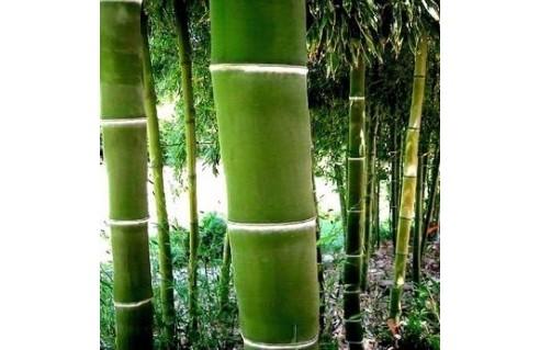 Bambous rustiques de jardin
