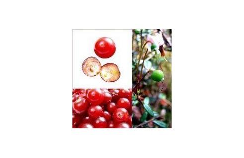 Canneberge, Cranberry, Airelle à gros fruits (Vaccinum)