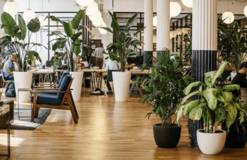 Plantes pour le bureau/ Télé-travail