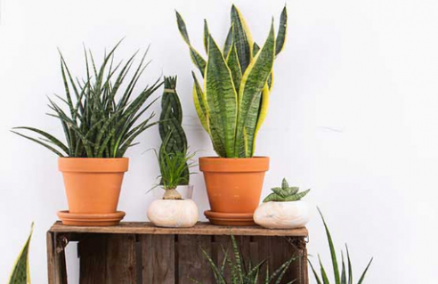 Collections de plantes d'intérieur