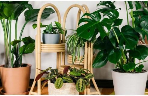 Toutes les plantes