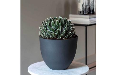 Plante avec pot décoratif