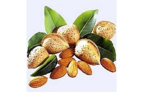 Prunus (Amandier)