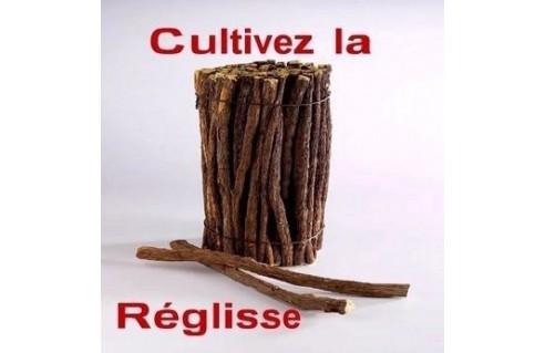 Réglisse (Glycyrrhiza)