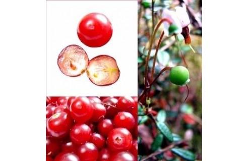 Vaccinium (Cranberry, Canneberge, Mytille d'amérique)
