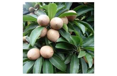 Vente en ligne de plantes rares et ethnobotaniques à petits prix toute l'année !