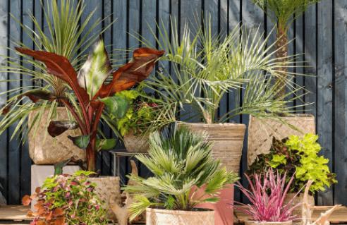 Plantes et arbustes à feuillages décoratifs