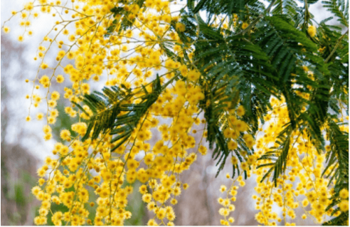 Plantes et arbustes fleuris
