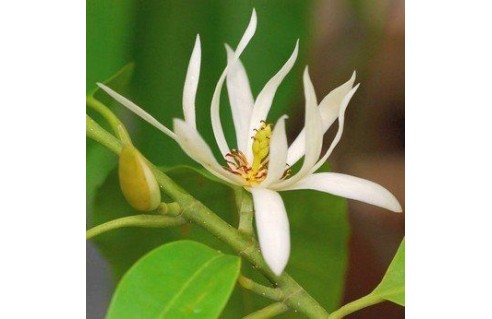 Vente en ligne de plantes exotiques et tropicales à petits prix toute l'année !