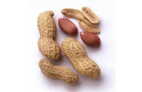 Arachis (Arachide, Cacahuète)