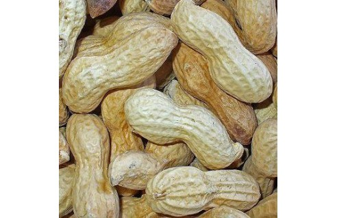 cacahuete arachis