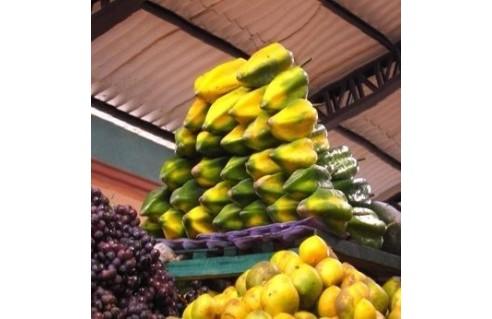 Arbre aux melons, Papaye, Papayer (Carica)