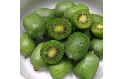 Baby Kiwi (actinidia arguta Issai)