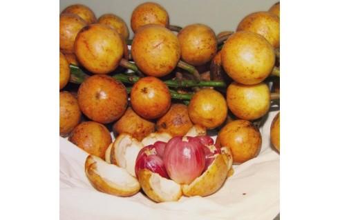 Baccaurea ramiflora  (Burmese Grape)