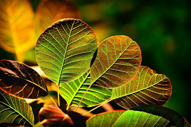Eclairage des plantes