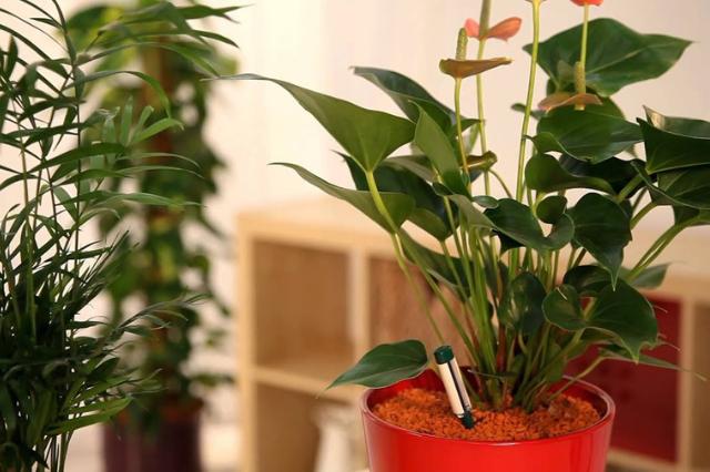 Cultiver ses plantes en Hydroponie