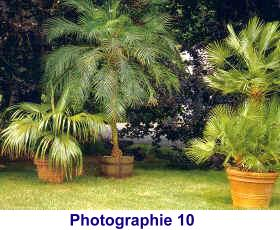 cr ez facilement un jardin exotique tropicaflore plantes exotiques. Black Bedroom Furniture Sets. Home Design Ideas